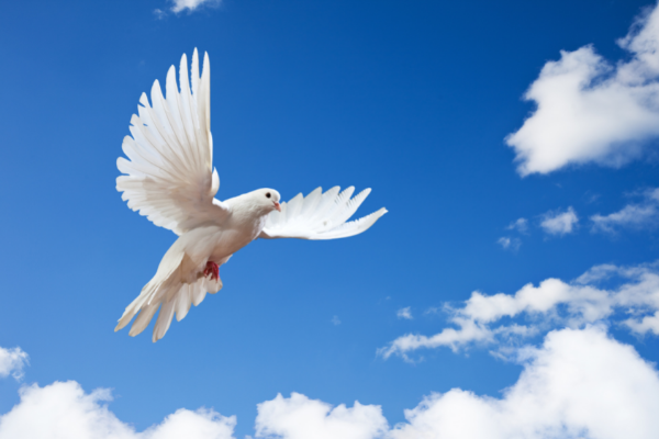 A marca da pomba branca